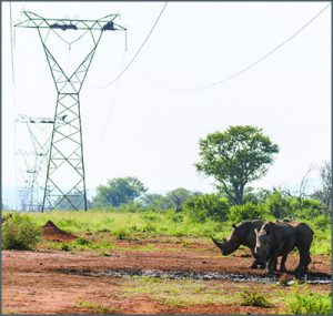 Power lines crossing a remote area with rhinos.
